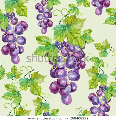 Vintage Green Grapes Seamless Pattern Stock photo © ConceptCafe
