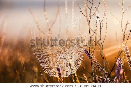 Spinneweb buitenshuis natuurlijke abstract textuur Stockfoto © OleksandrO