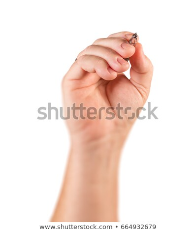 Male Hand Holding Drafting Pencil In Drawing Position Isolated o Stock photo © feverpitch