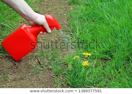 Ot katil görüntü şişe siyah bitki Stok fotoğraf © cteconsulting