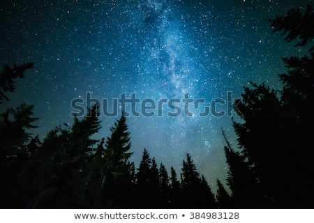 starry night sky and forest silhouette stock photo © juhku