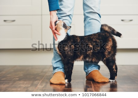 Young man stroking cat Stock photo © IS2