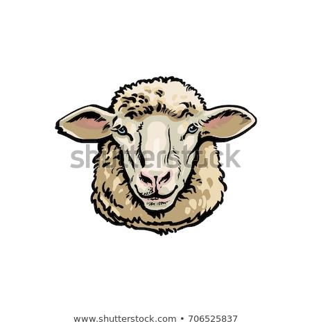 Sheep face isolated. Ewe head. Vector illustration Stock photo © popaukropa
