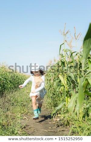 Teenage girl walking in cornfield Stock photo © IS2