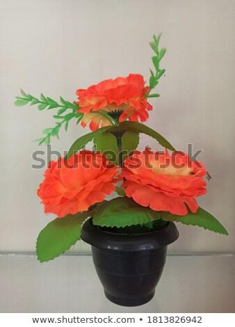decoratief · bloem · bloempot · geïsoleerd · witte · voorjaar - stockfoto © popaukropa