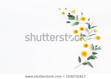 Stok fotoğraf: çiçekler · çerçeve · yaprakları · beyaz · üst · görmek