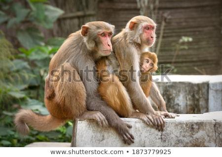 Stock fotó: Gyerekek · néz · gorilla · állatkert · illusztráció · gyermek