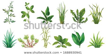 Vegetação verde plantas conjunto coral folhas Foto stock © robuart