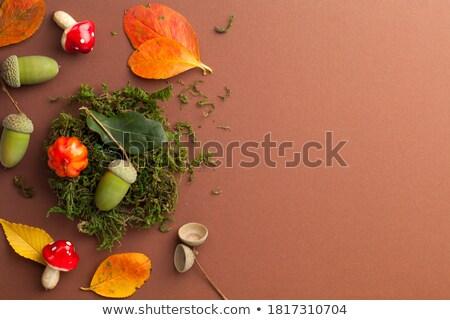Sonbahar yaprakları simge oda ahşap 3D Stok fotoğraf © make