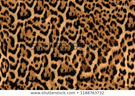бесшовный Leopard мех шаблон модный Сток-фото © ESSL