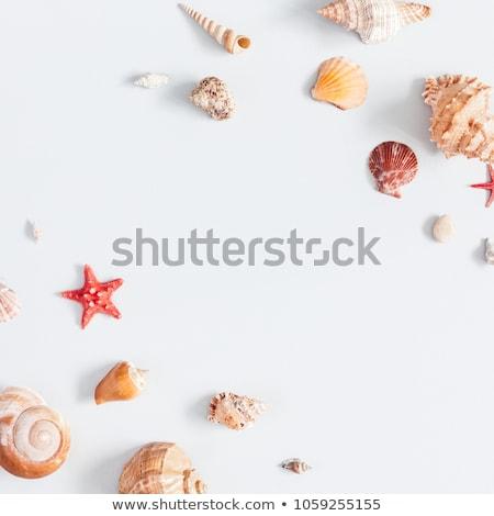 Stock fotó: Tenger · kagylók · kövek · tengerpart · textúra · háttér
