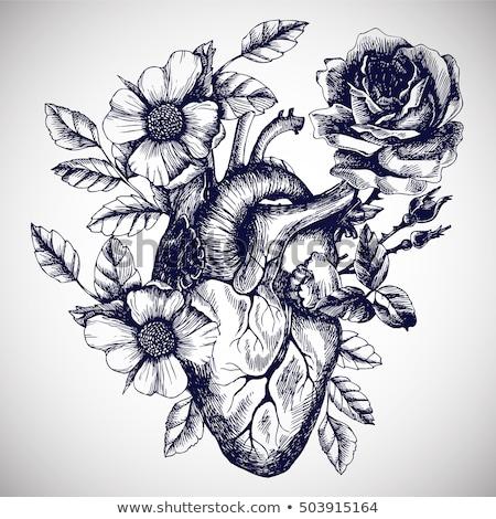 Coração florescer flor planta romance conceito Foto stock © njaj