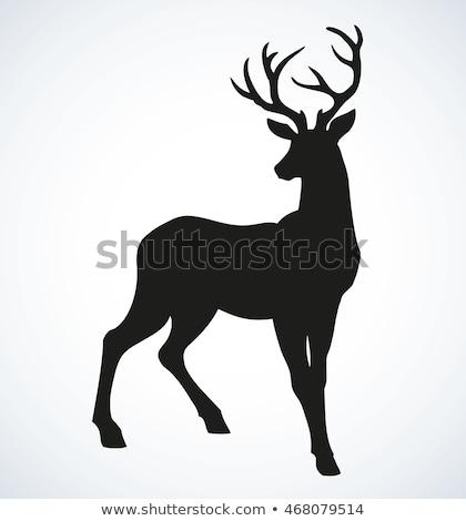 deer doe standing in forest Stock photo © goce