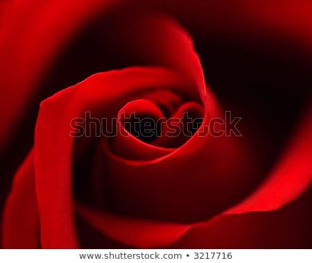 One red rose and message-card Stock photo © boroda