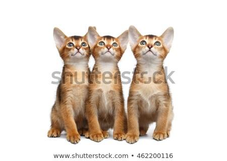 3 Kittens Looking Up Stock photo © ajn