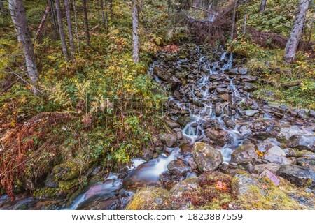 Forest brook Stock photo © Gbuglok