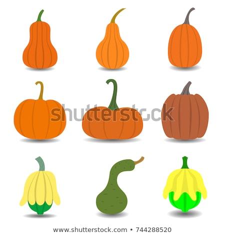 Vector icon gourd Stock photo © zzve