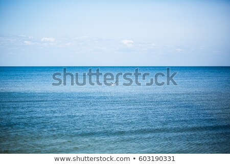 Seagull Gliding against the Backdrop of a heavenly, beautiful blue sky with cotton puff clouds. Stock photo © mikecharles