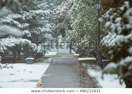 first snow in the park stock photo © trala
