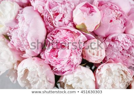 ピンク 孤立した 白 葉 夏 ストックフォト © neirfy