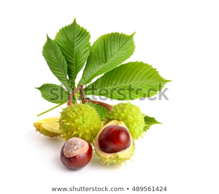 chestnut leaves in sunlight stock photo © pixelman