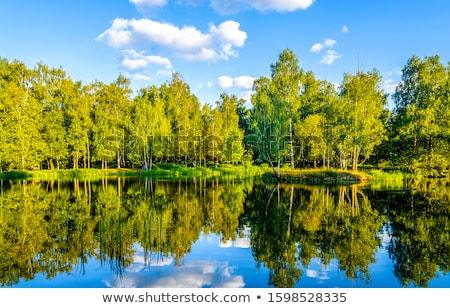 verde · floresta · rio · grande · pedras · árvore - foto stock © OleksandrO
