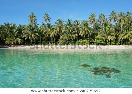 Untouched tropical beach in Bocas del Toro Panama Stock photo © Cursedsenses