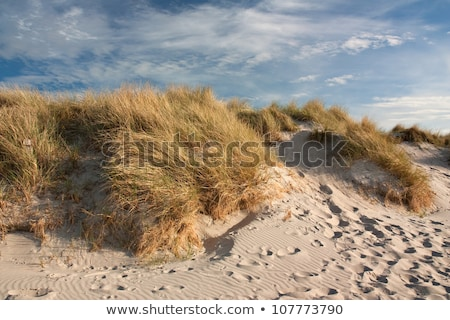 Nature landscape of wild grass at beach coast Stock photo © cienpies
