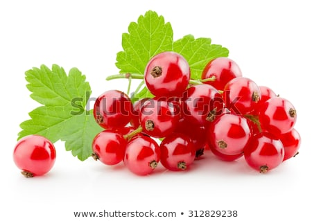 red currant isolated on white Stock photo © M-studio