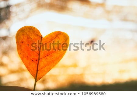 A plant with a heart-shaped leaves Stock photo © bluering