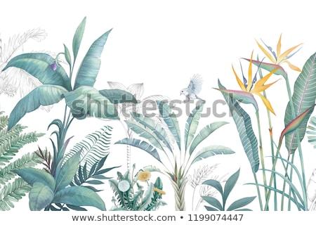 Trópusi jelenet réteges illusztráció könnyű Stock fotó © DzoniBeCool