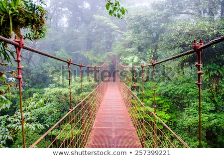 Rainforest landscape in Monteverde Costa Rica Stock photo © Juhku