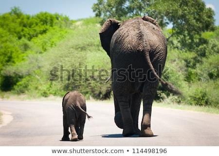 fiatal · hiéna · sétál · út · park · Dél-Afrika - stock fotó © compuinfoto