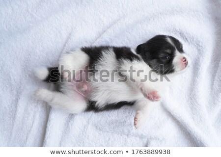 Kiskutyák megnyugtató természet pár szín kutyakölyök Stock fotó © IS2