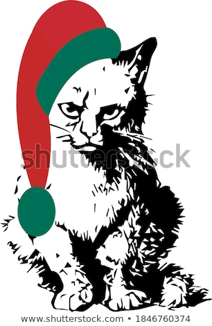 Hater Grumpy cat. Angry pet. Vector illustration Stock photo © MaryValery