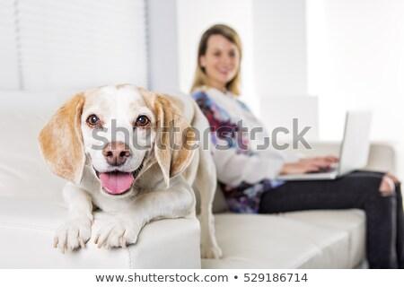 mulher · animal · de · estimação · bigle · cão · proprietário · família - foto stock © lopolo