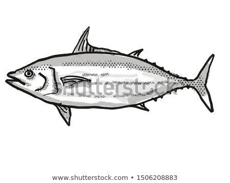 Tonijn australisch vis cartoon retro tekening Stockfoto © patrimonio