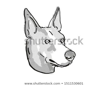 Basenji Dog Breed Cartoon Retro Drawing Stock photo © patrimonio