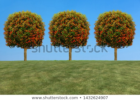 Apple Tree with Yellow Fruits on Top Harvesting Stock photo © robuart