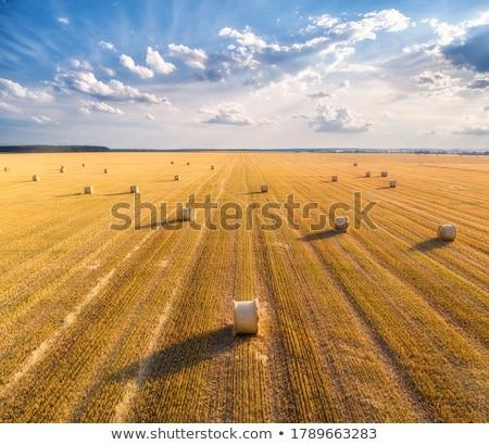 Rolniczy krajobraz siano bela plastikowe Zdjęcia stock © ivonnewierink