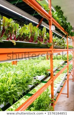 Parecchi fresche verde piantine Foto d'archivio © pressmaster