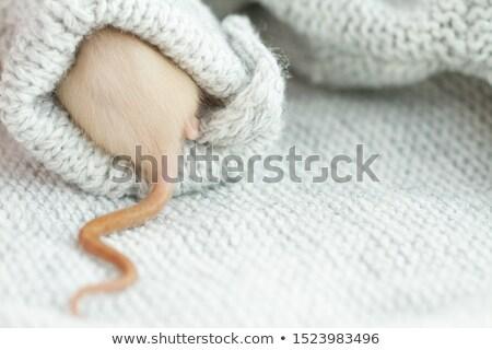 Branco rato ilustração mouse fundo arte Foto stock © bluering
