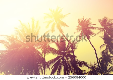 Belo árvores clima verão natureza Foto stock © Anneleven