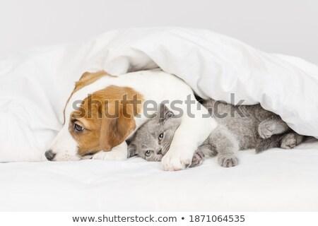 небольшой щенков Ложь белый удобный кровать Сток-фото © vkstudio
