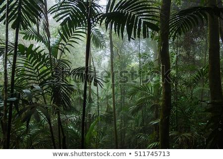 плотный rainforest джунгли фотография глядя пышный Сток-фото © mtilghma