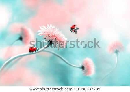 katicabogár · ül · virág · kert · nyár · egyedül - stock fotó © mikko