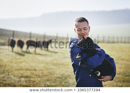 Livestock farm workers Stock photo © photography33