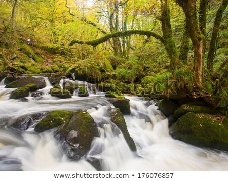Cornwall erdő Anglia zöld vízesés folyó Stock fotó © bobhackett