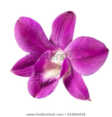 Bíbor orchidea borospohár makró virág víz Stock fotó © yul30
