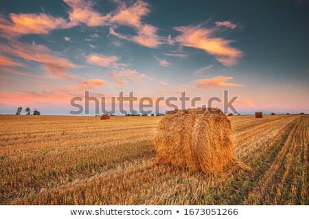 Széna mező este égbolt fű nyár Stock fotó © Roka